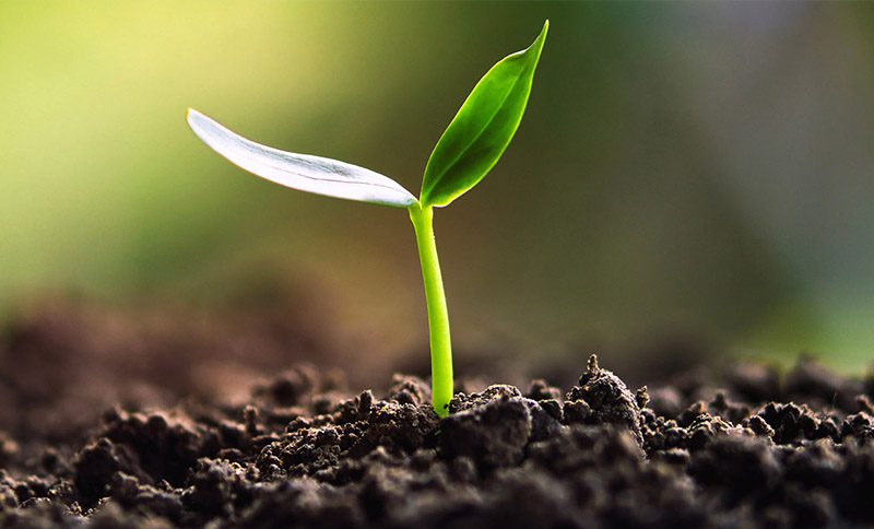 Nigeria Plant Breeders' Rights