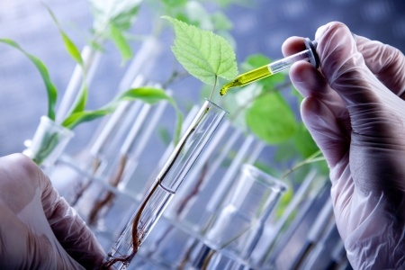 What is Plant Breeders' Rights?