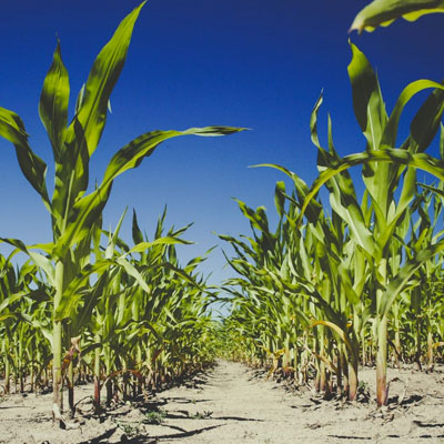 Plant Breeders Rights South Africa